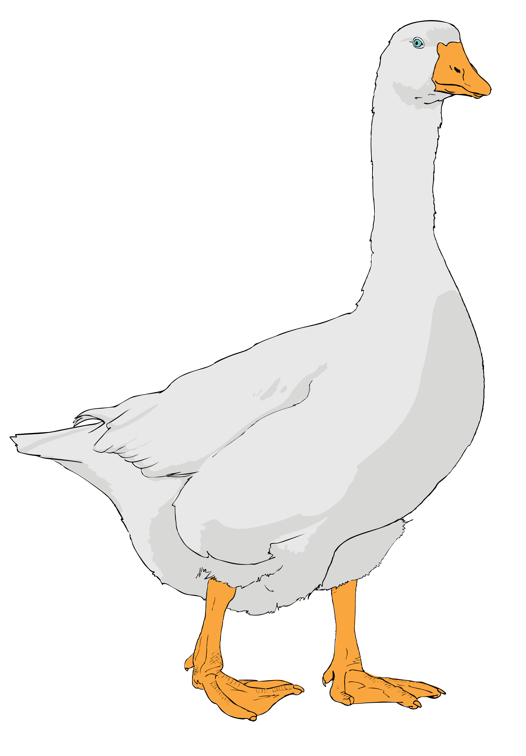 collection of png. Cute clipart goose