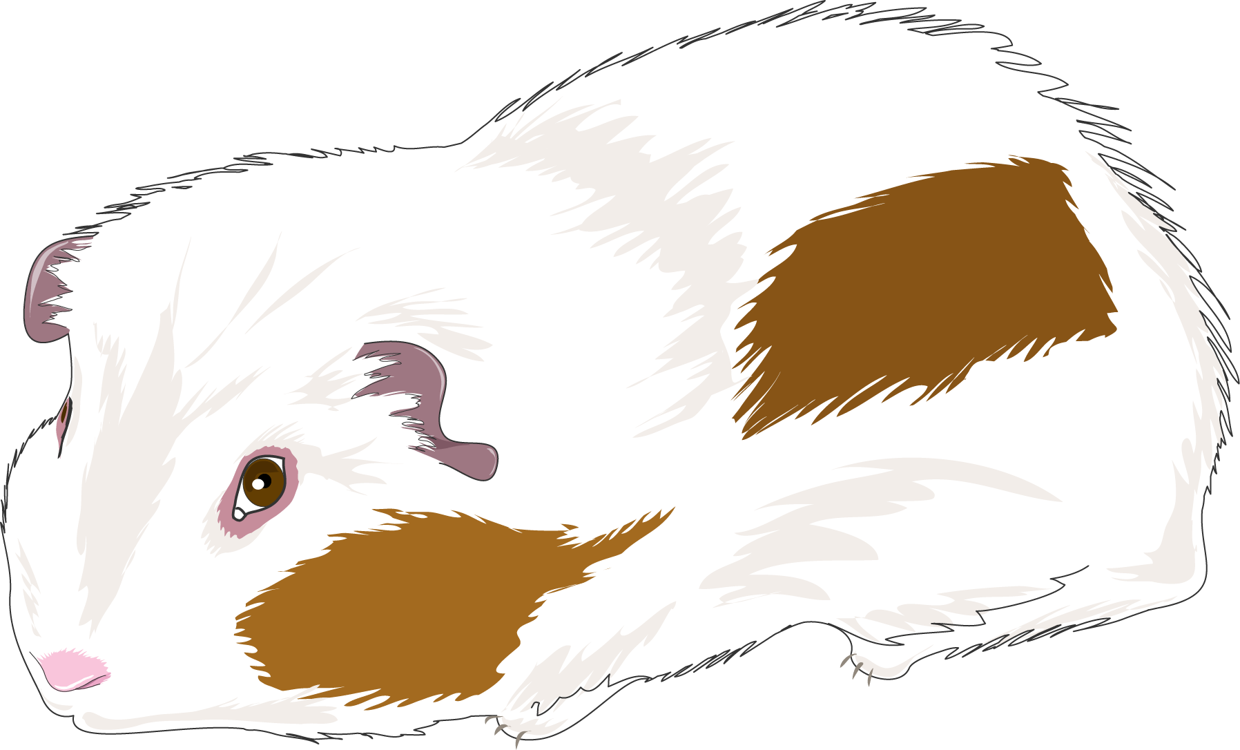 Clipart face guinea pig. At getdrawings com free