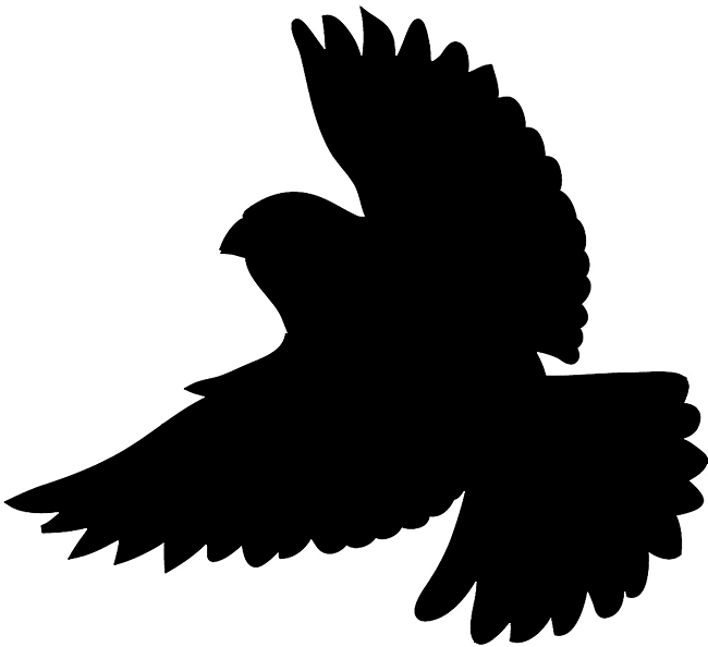 Bird silhouettes silhouette of. Parrot clipart shadow