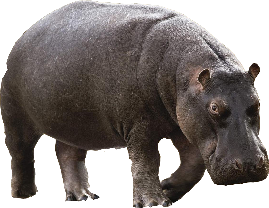 Png images free download. Female clipart hippo