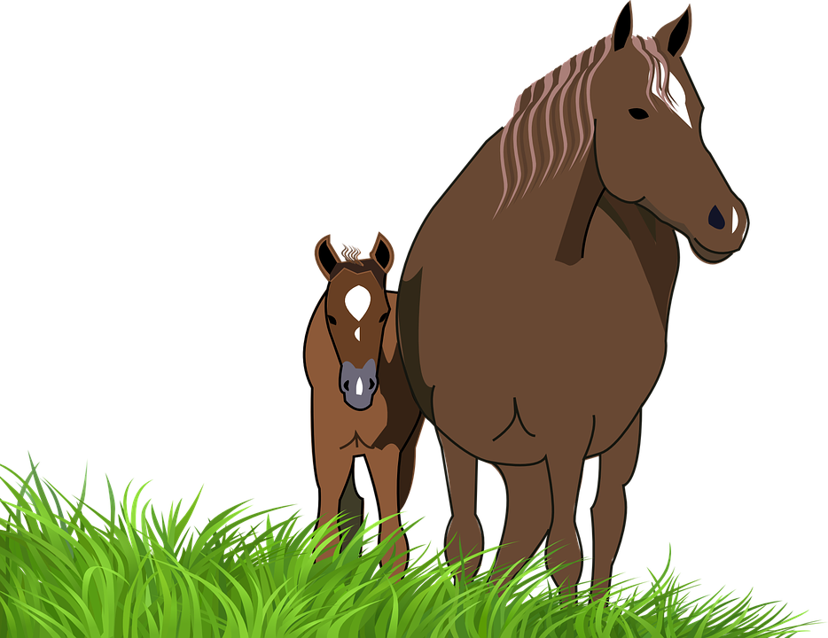 Mare . Clipart face horse