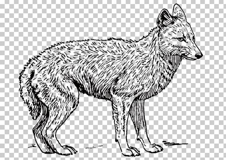 Coyote clipart angry. Dog black backed jackal