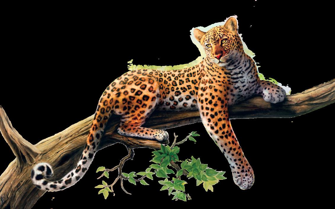 Png stock by gilgamesh. Pattern clipart jaguar