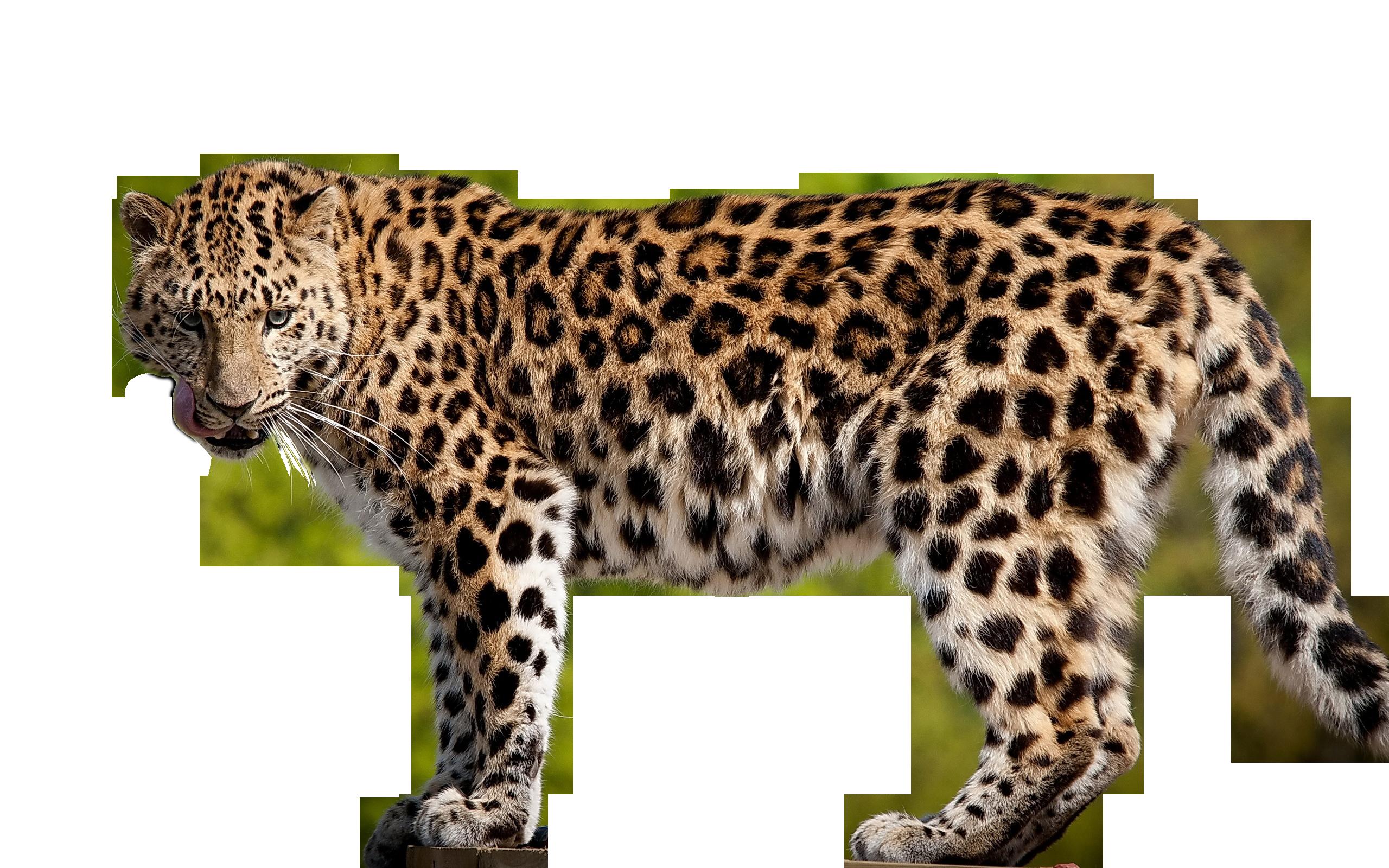 Hq png transparent images. Clipart face leopard