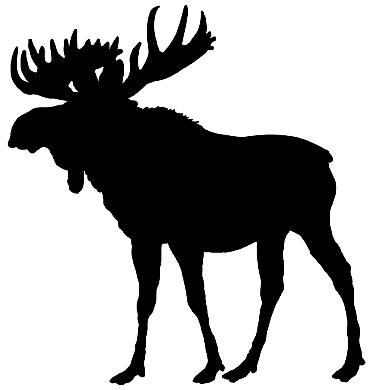 A woodland animal silhouette. Outline clipart moose