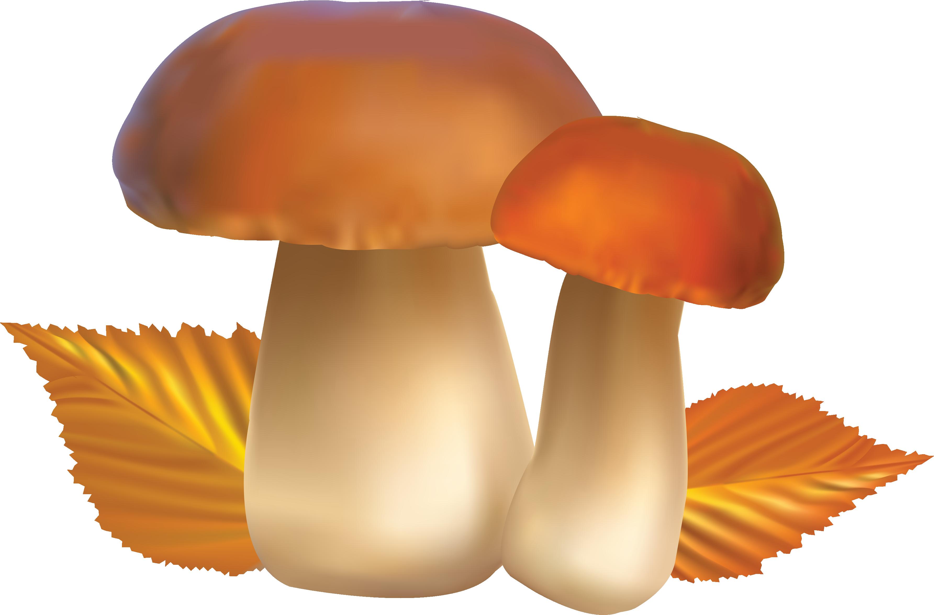 Clipart food mushroom. Png image lots clip