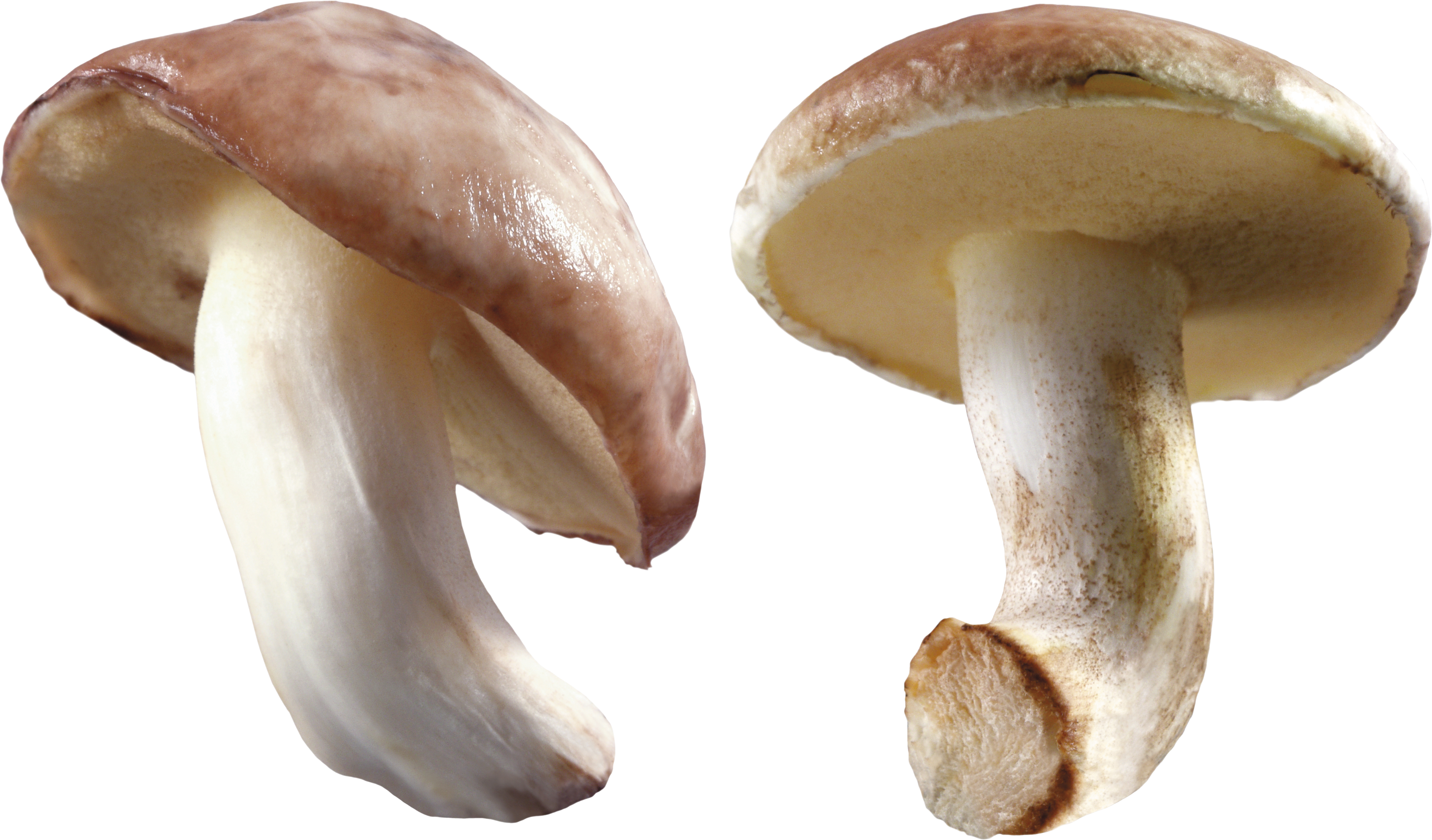 Thirty eight isolated stock. Clipart food mushroom