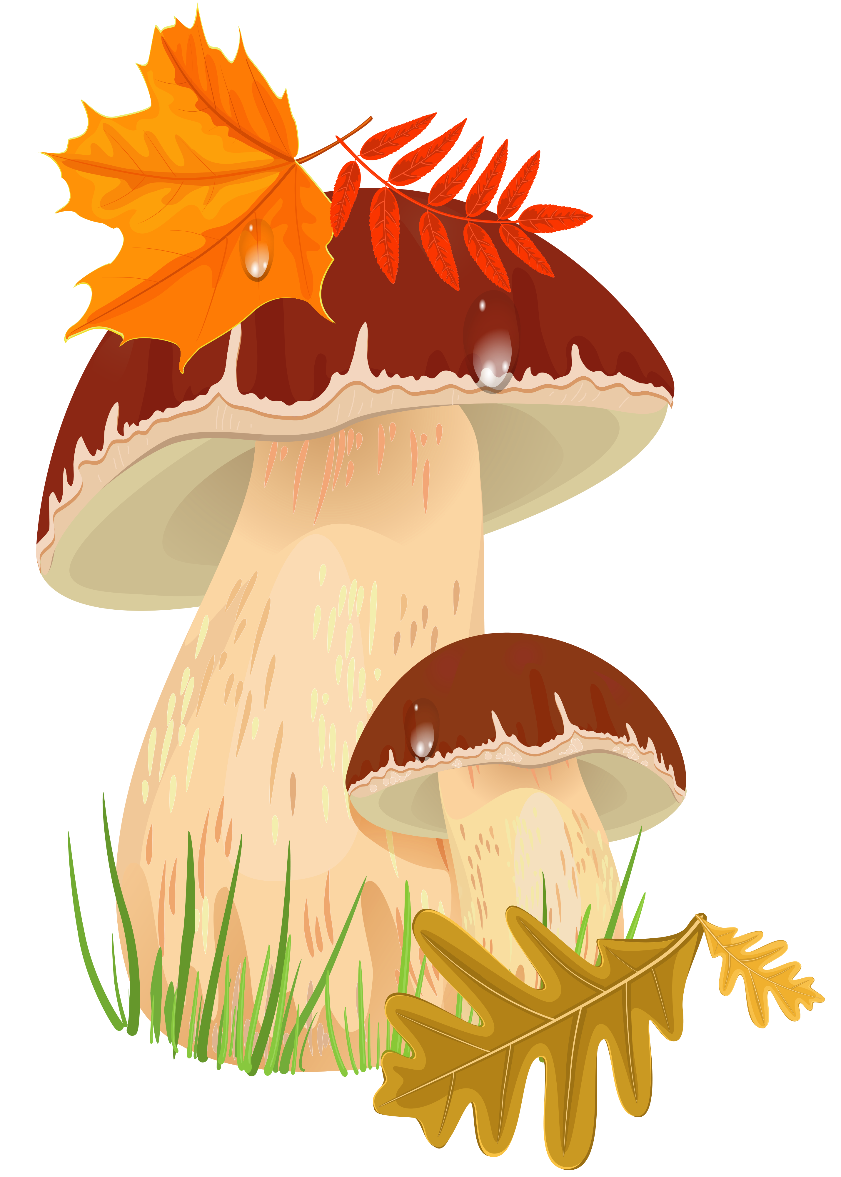 Fall mushrooms png picture. Woodland clipart toadstool