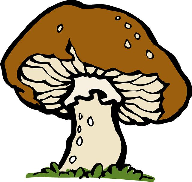 Ladybug clipart mushroom. Pin by dayka sherwani