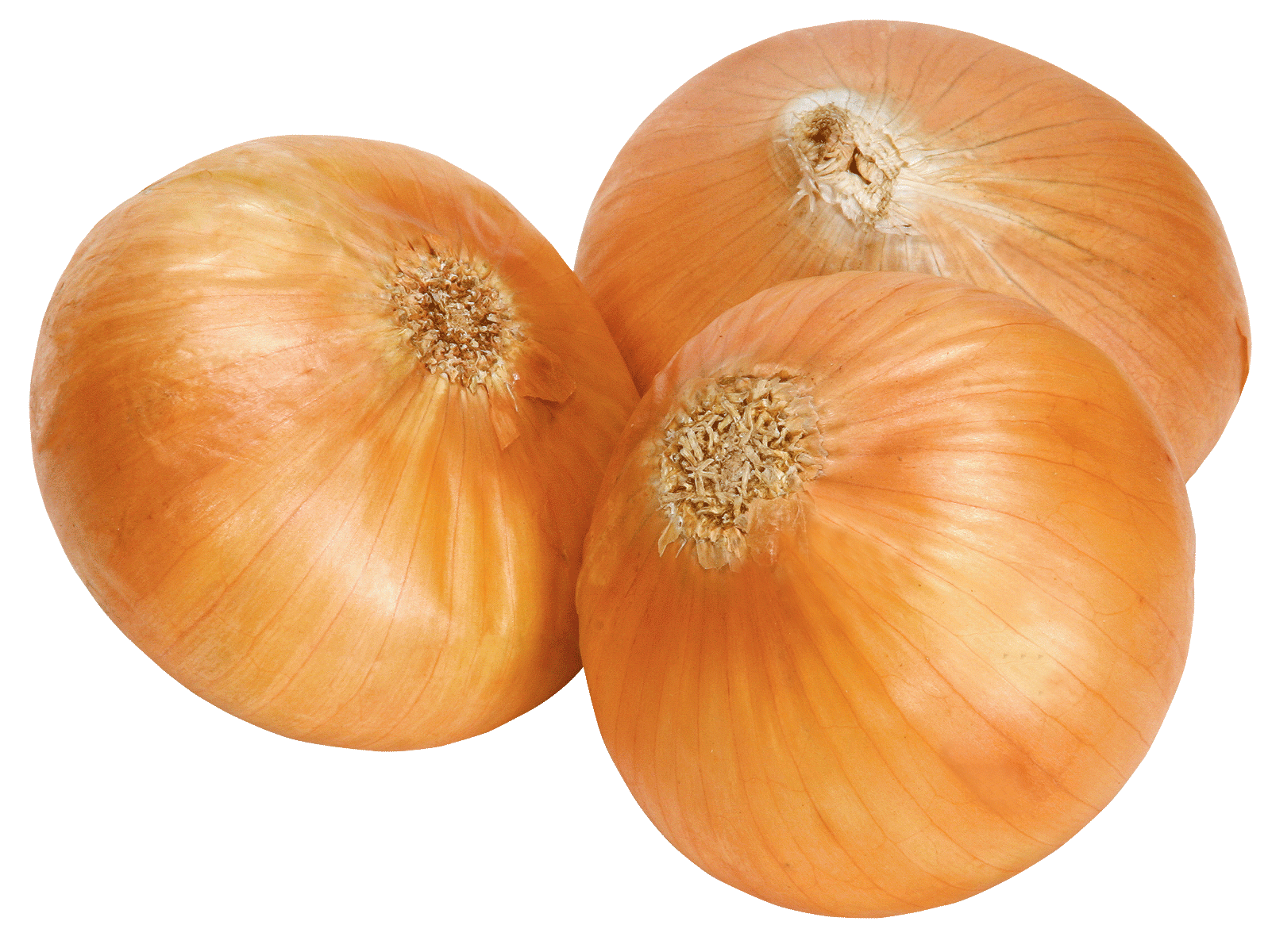 Onion clipart chopped onion. Ten isolated stock photo