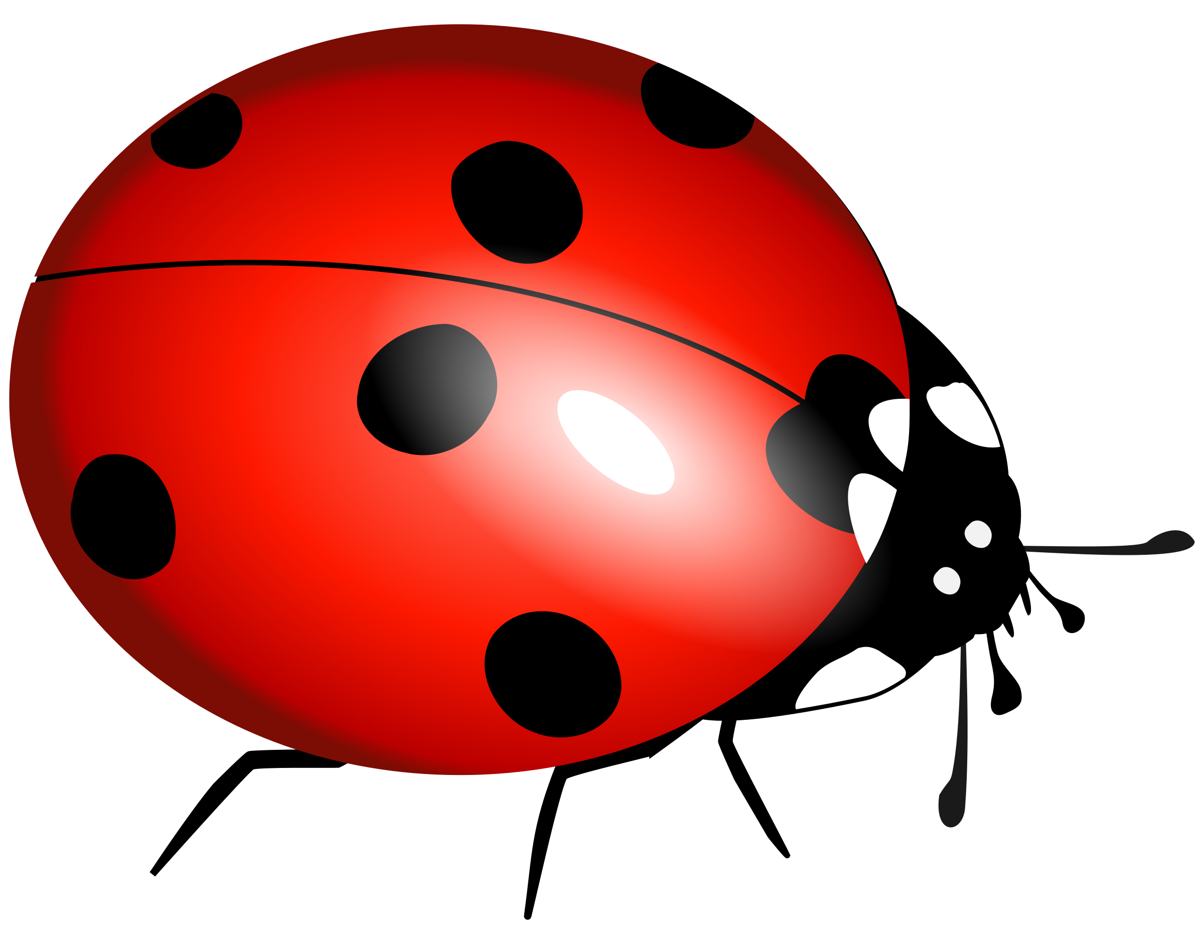 One isolated stock photo. Ladybug clipart sketch