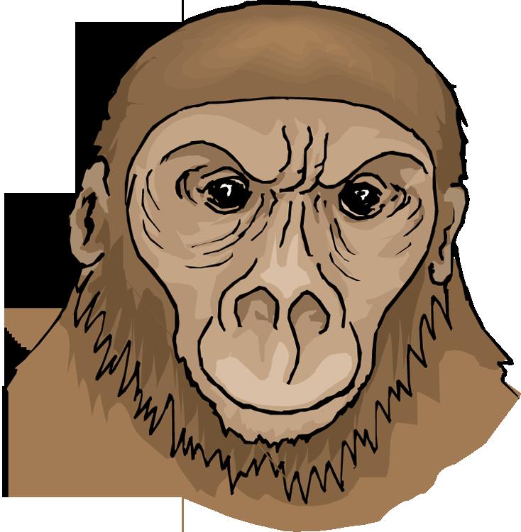 Free ape . Clipart face orangutan