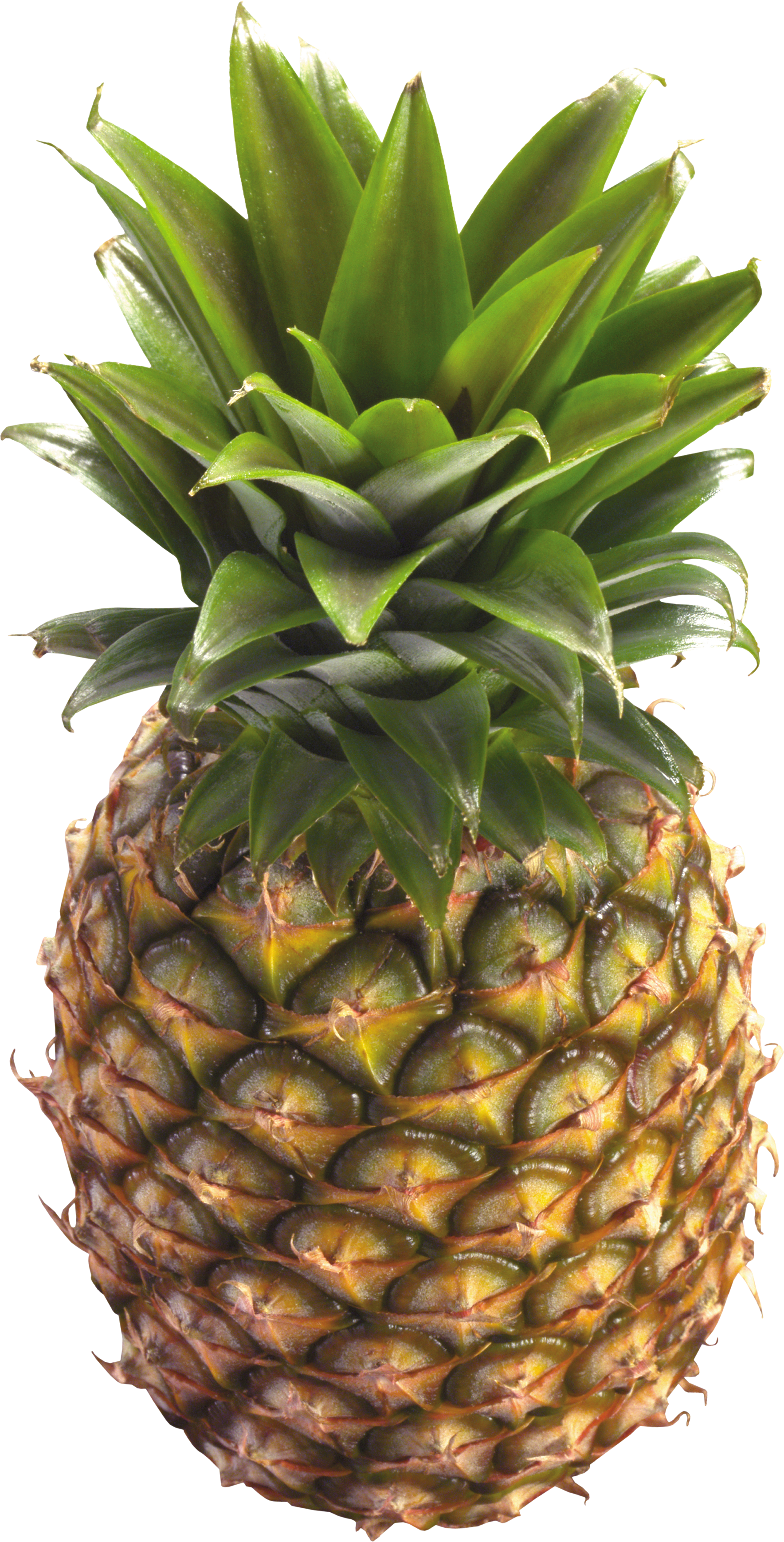 Thirty two isolated stock. Pineapple clipart file