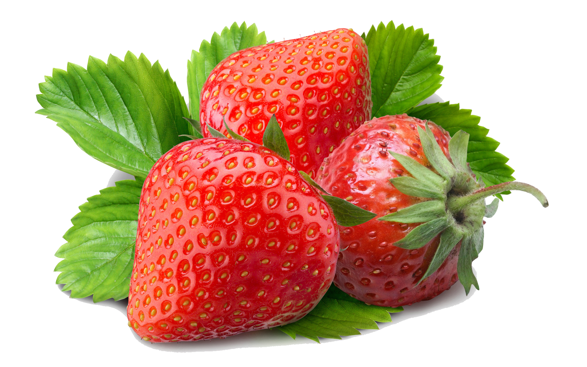 Fruit clipart strawberry. Free tortilla cliparts download
