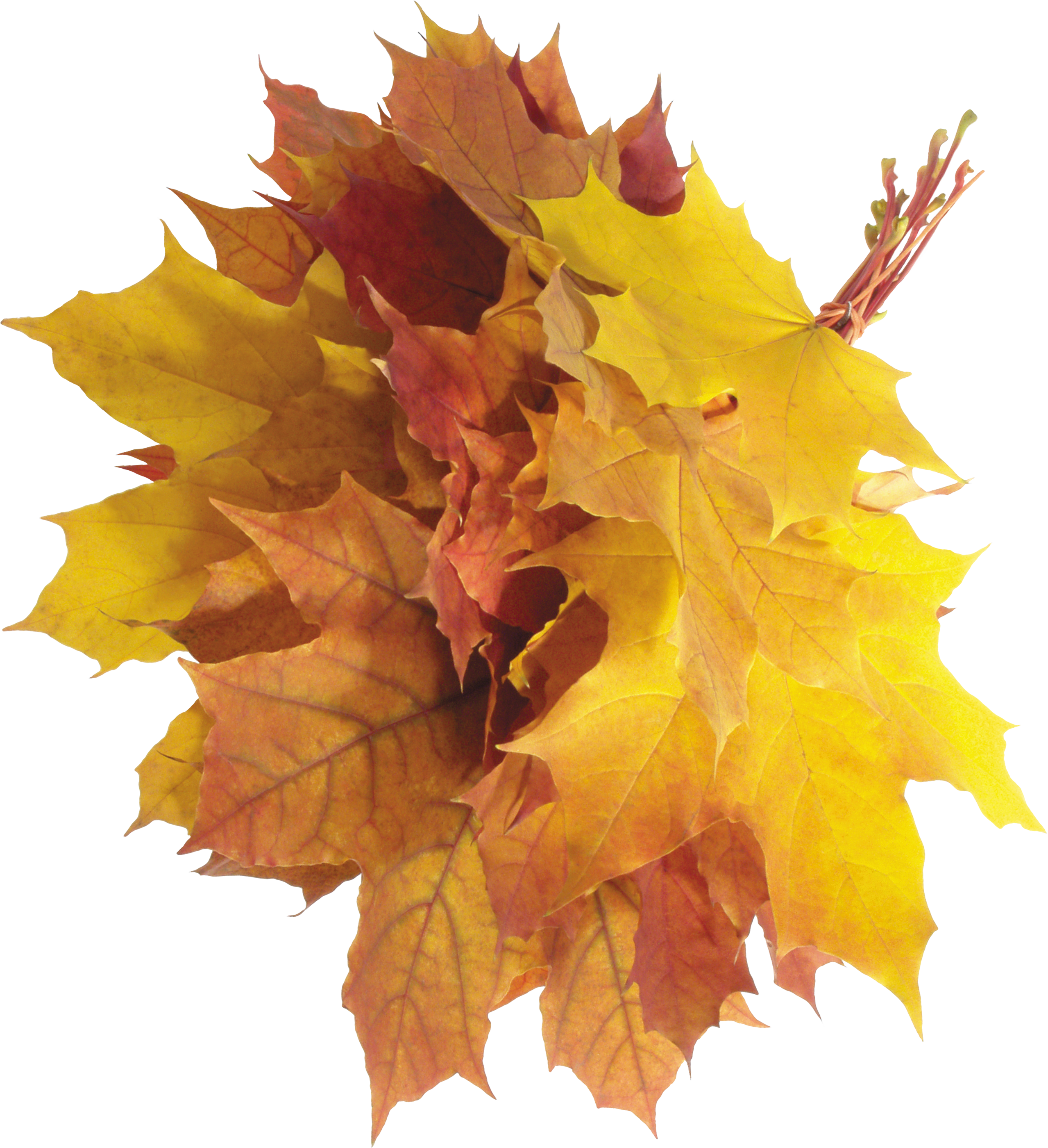 Autumn leaves image purepng. Free png images download