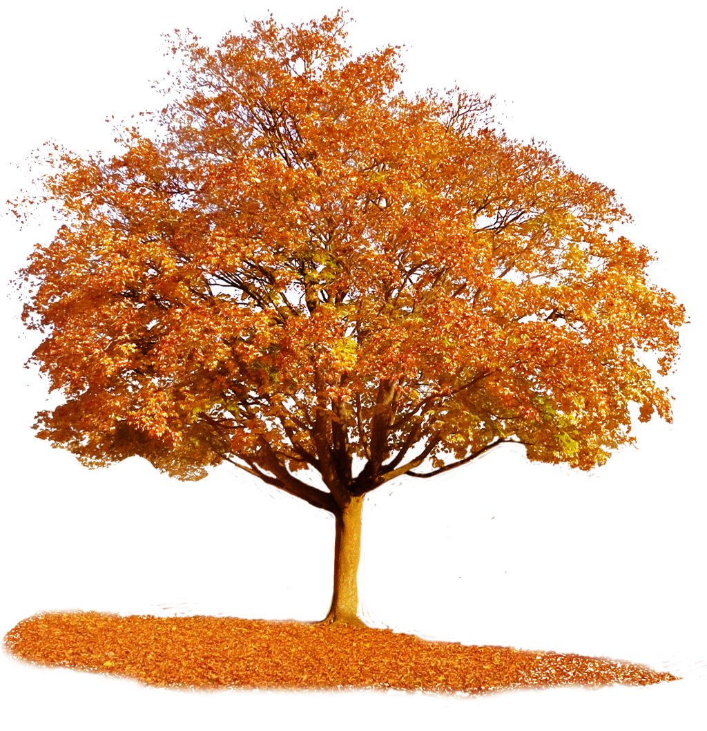 Tree clipart november.  autumn by tigers