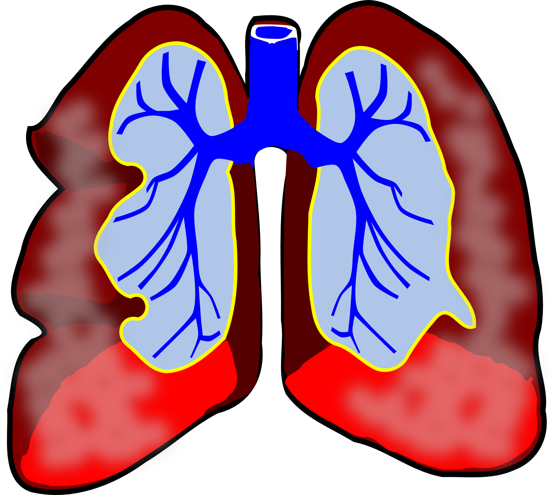 Lungs free download best. Clipart fall cartoon