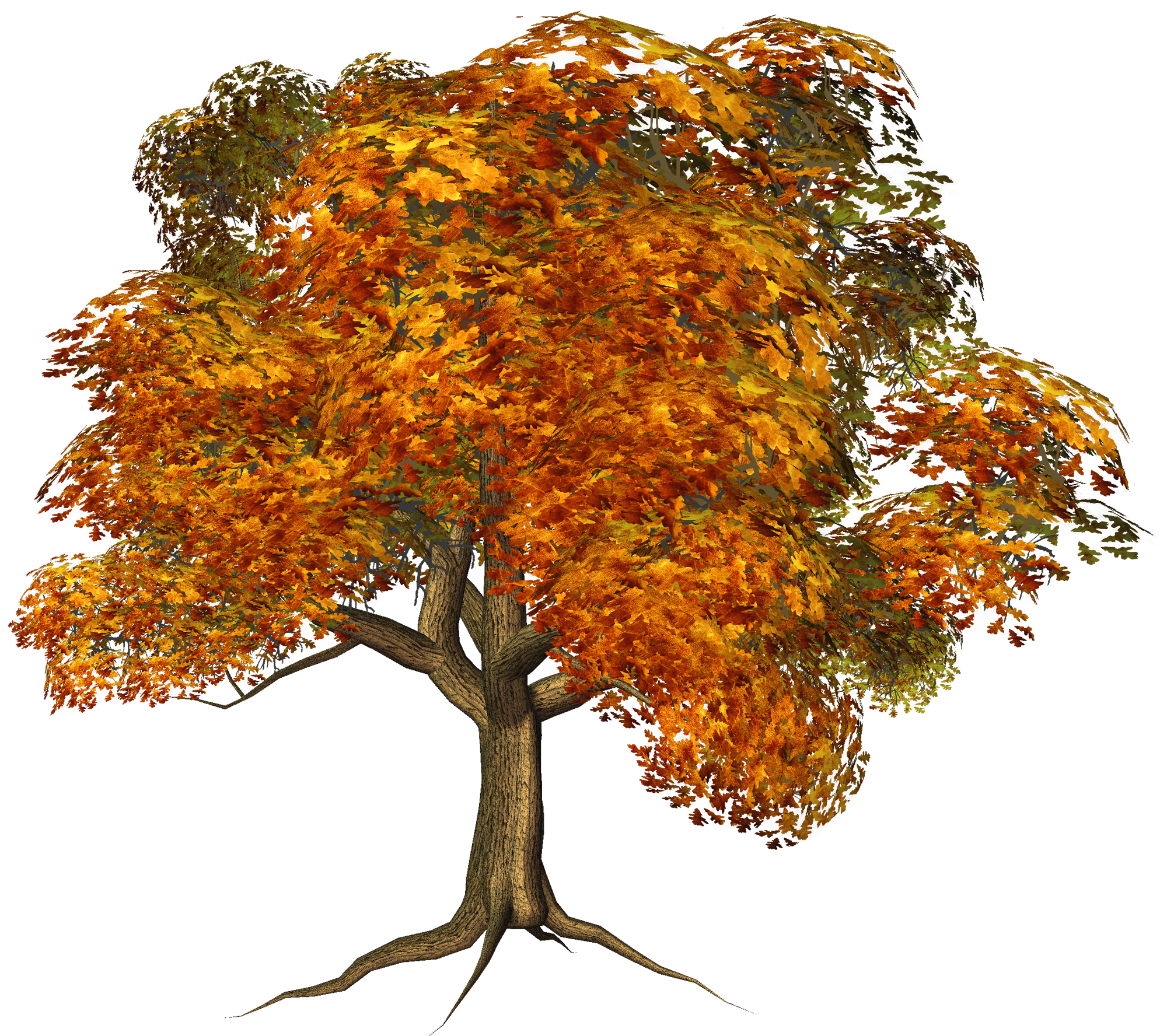 Large gallery yopriceville high. Clipart fall deciduous tree