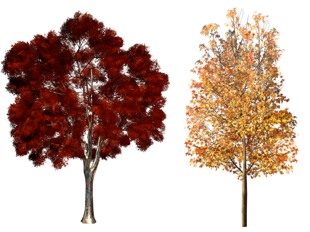 Clipart fall deciduous tree. Plant clip art autumn