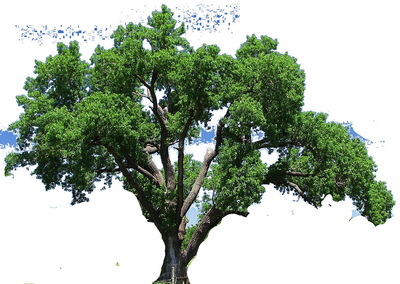 Oak kid envirmental energy. Tree clipart science