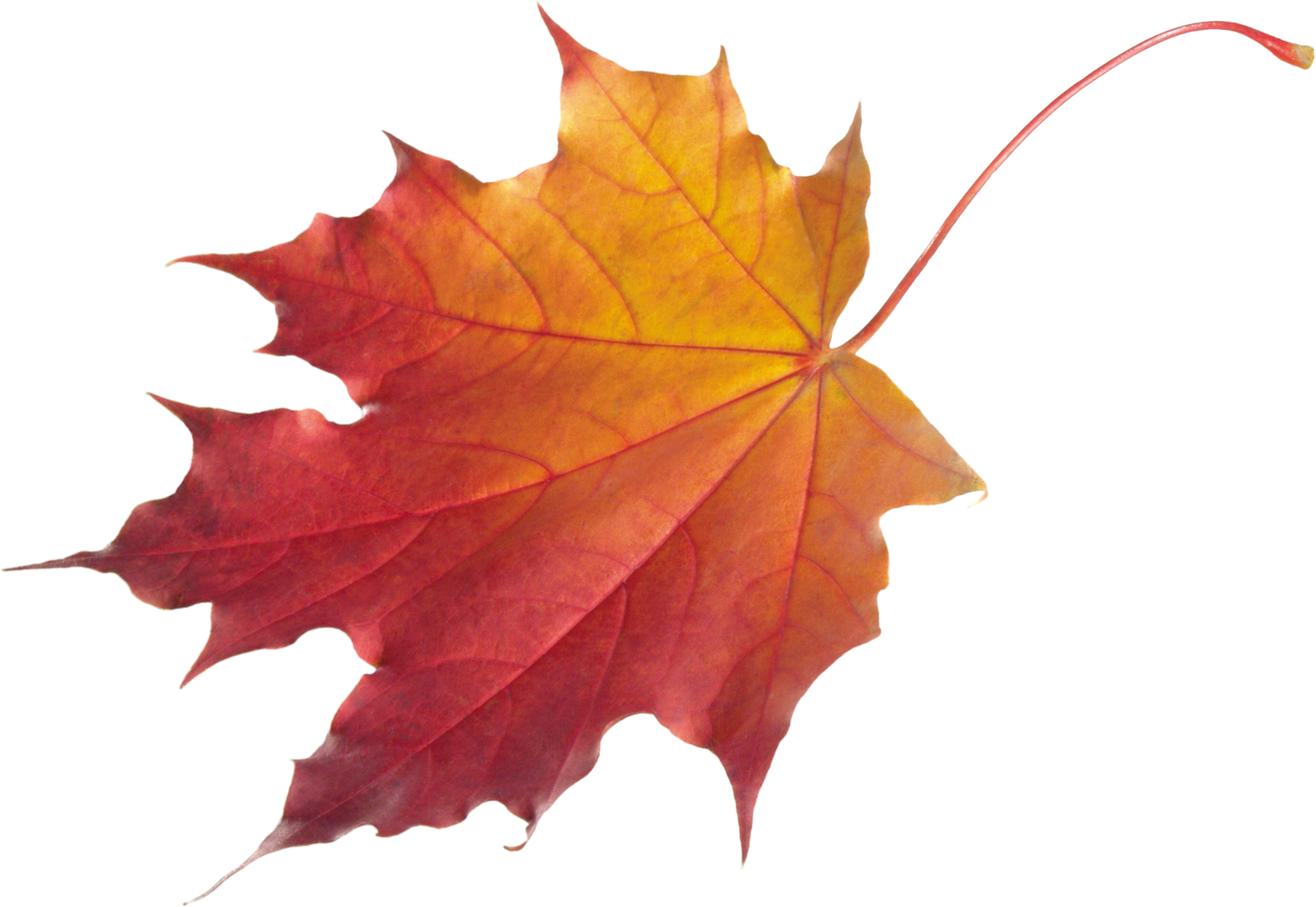 The rain is coming. Clipart fall deciduous tree