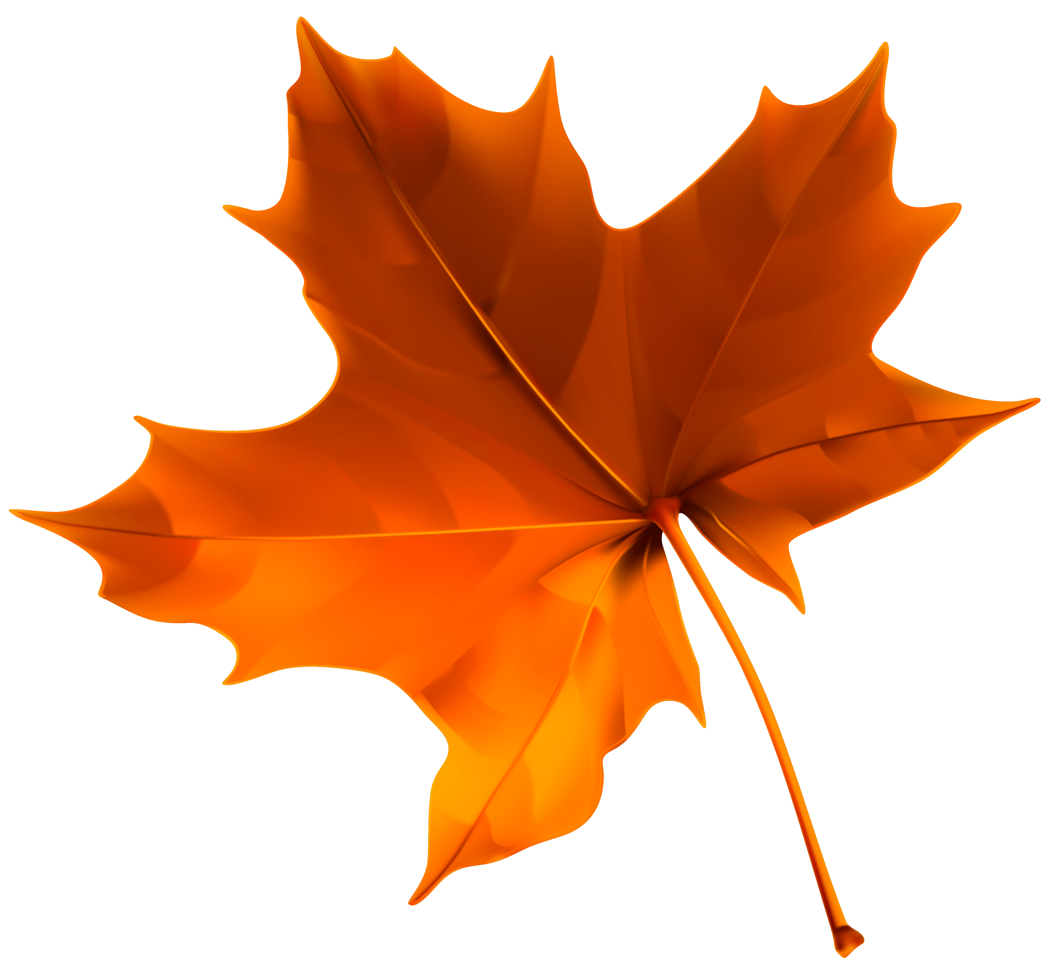 Autumn red leaf png. Clipart fall deciduous tree