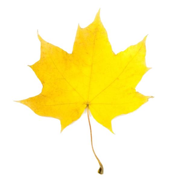 Clipart fall fal. Leaves clip art free
