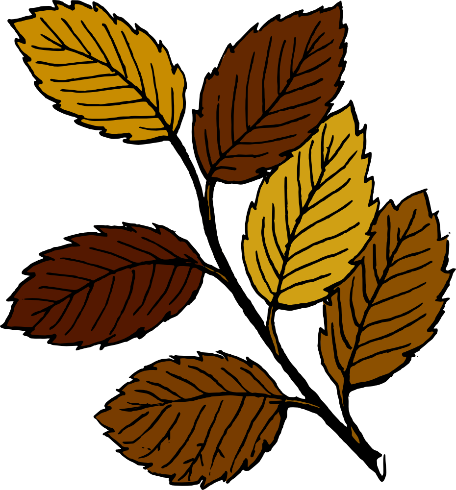 Fall panda free images. Stick clipart brown tree branch
