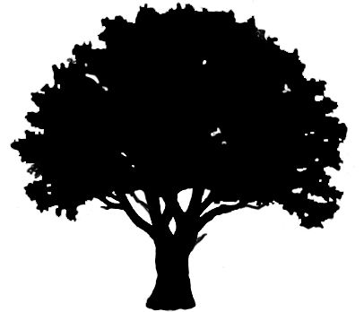 Tree clipart oak. Free download outline for