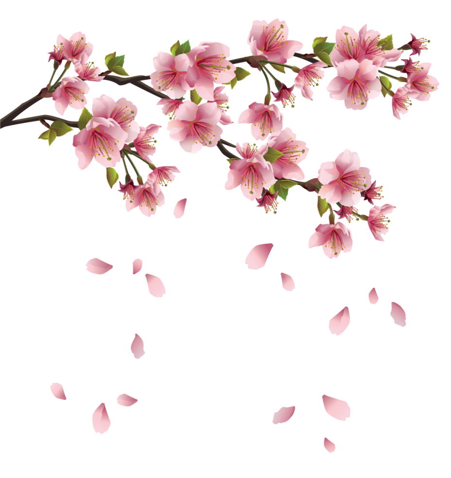 Beautiful pink spring branch. Japanese flower png