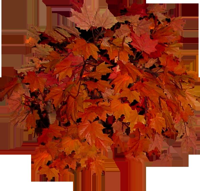Leaves group leaves