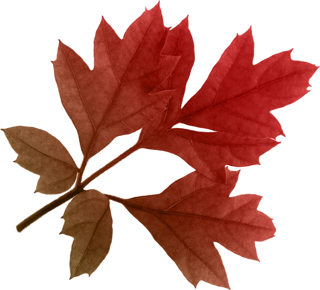 Autumn leaves png image. Tree clipart november