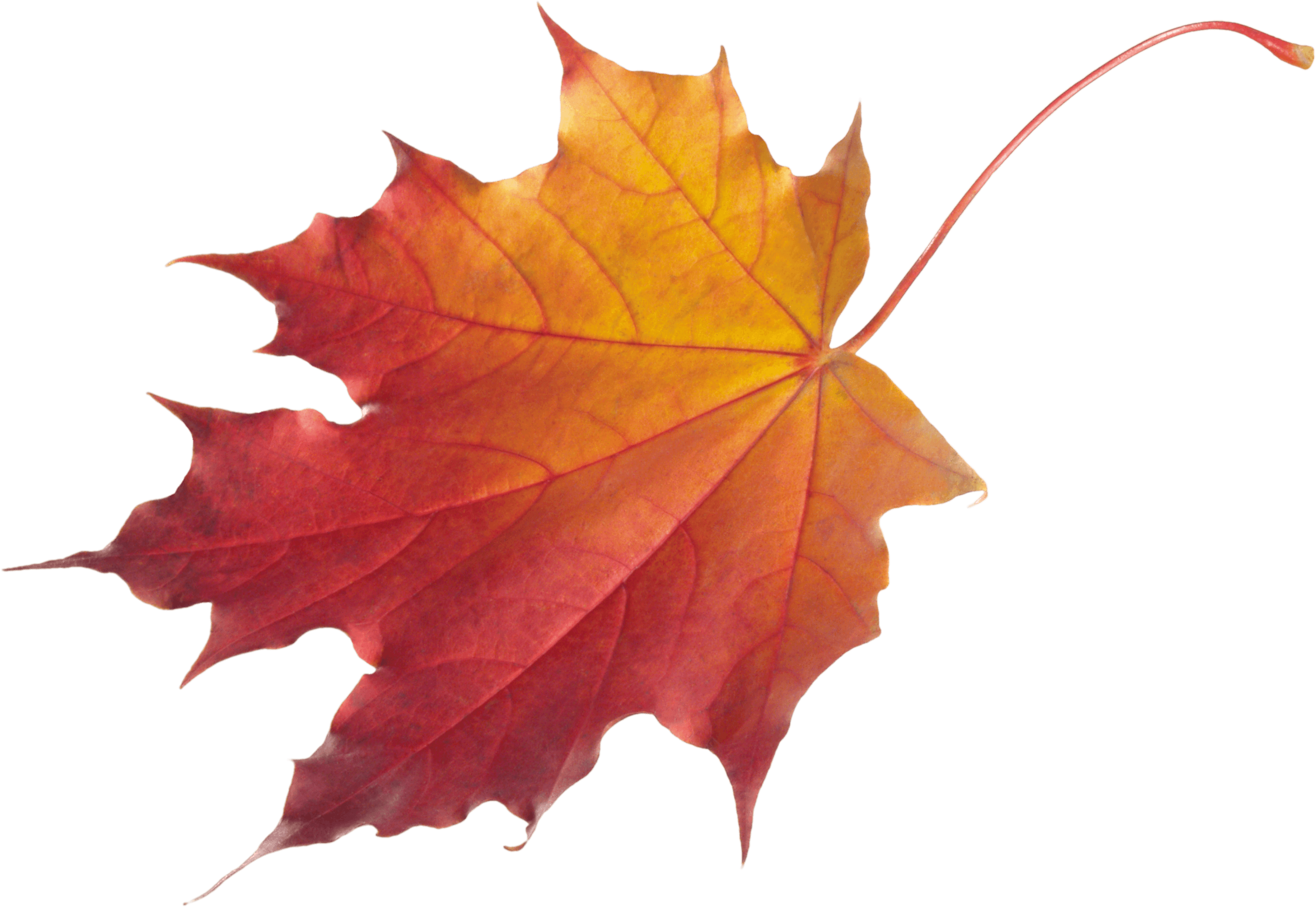 Autumn drawing at getdrawings. Colors clipart leaf