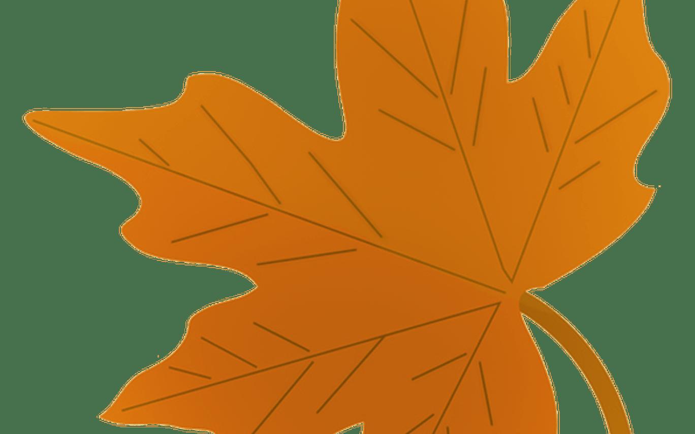 Leaves orange leaves