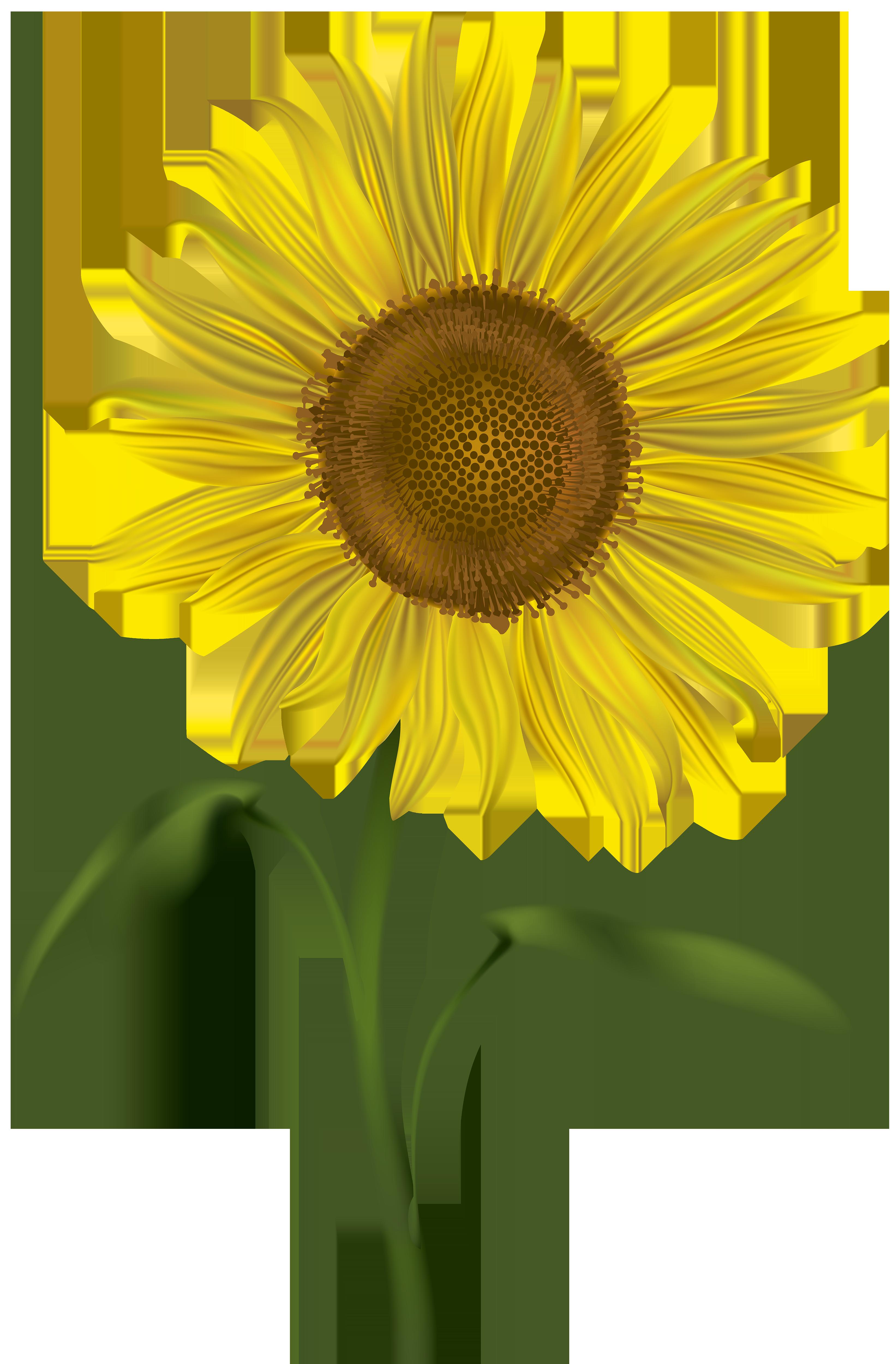Transparent png clip art. Clipart fall sunflower