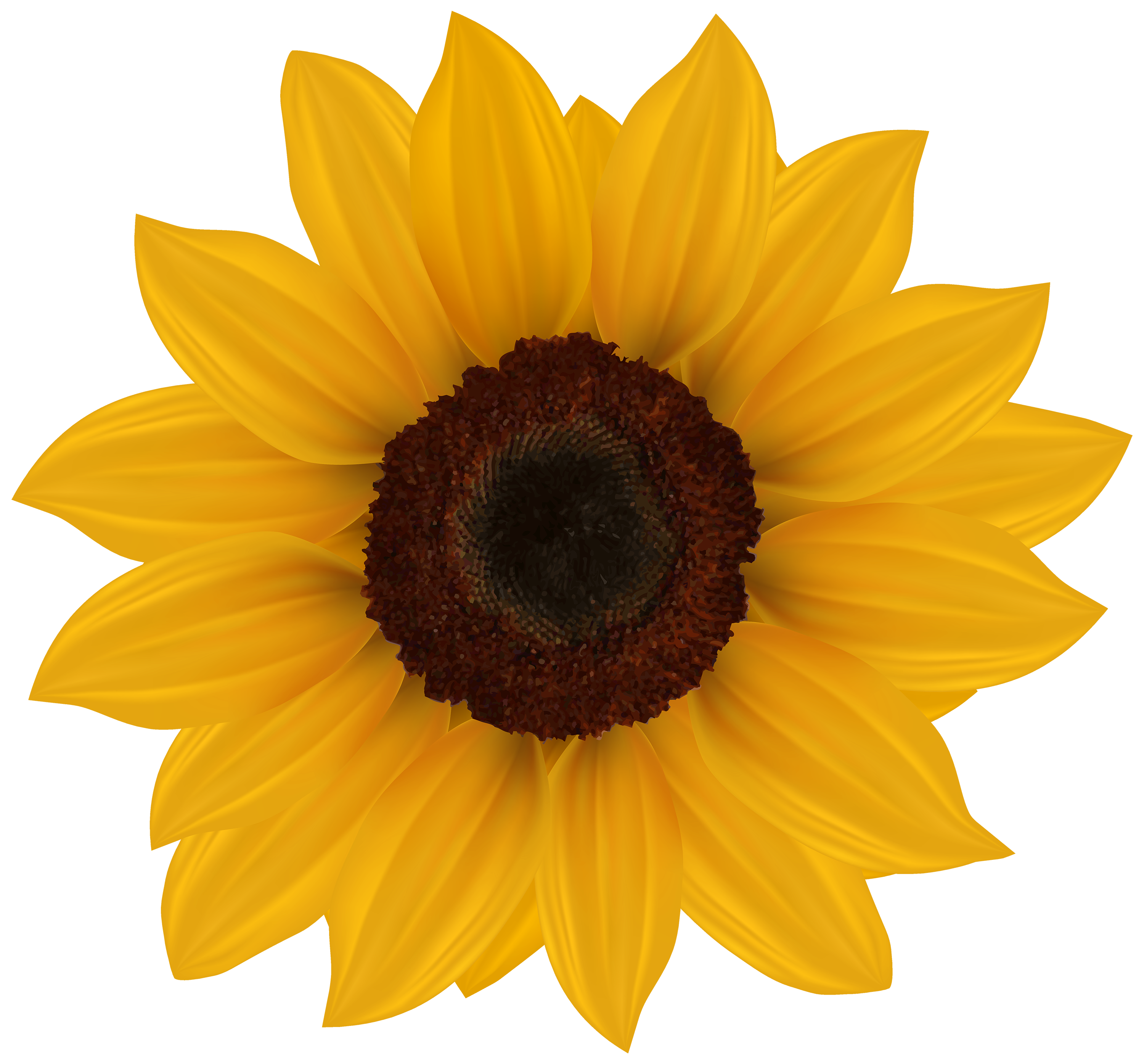 Clipart fall sunflower. Clip art images onclipart