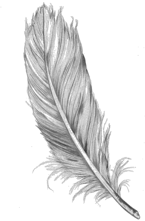 Feather clipart animal. Image tumblr transparent png