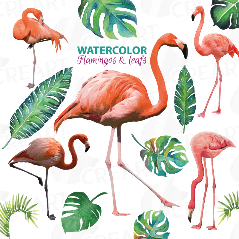 Mango clipart five. Watercolor flamingos with water