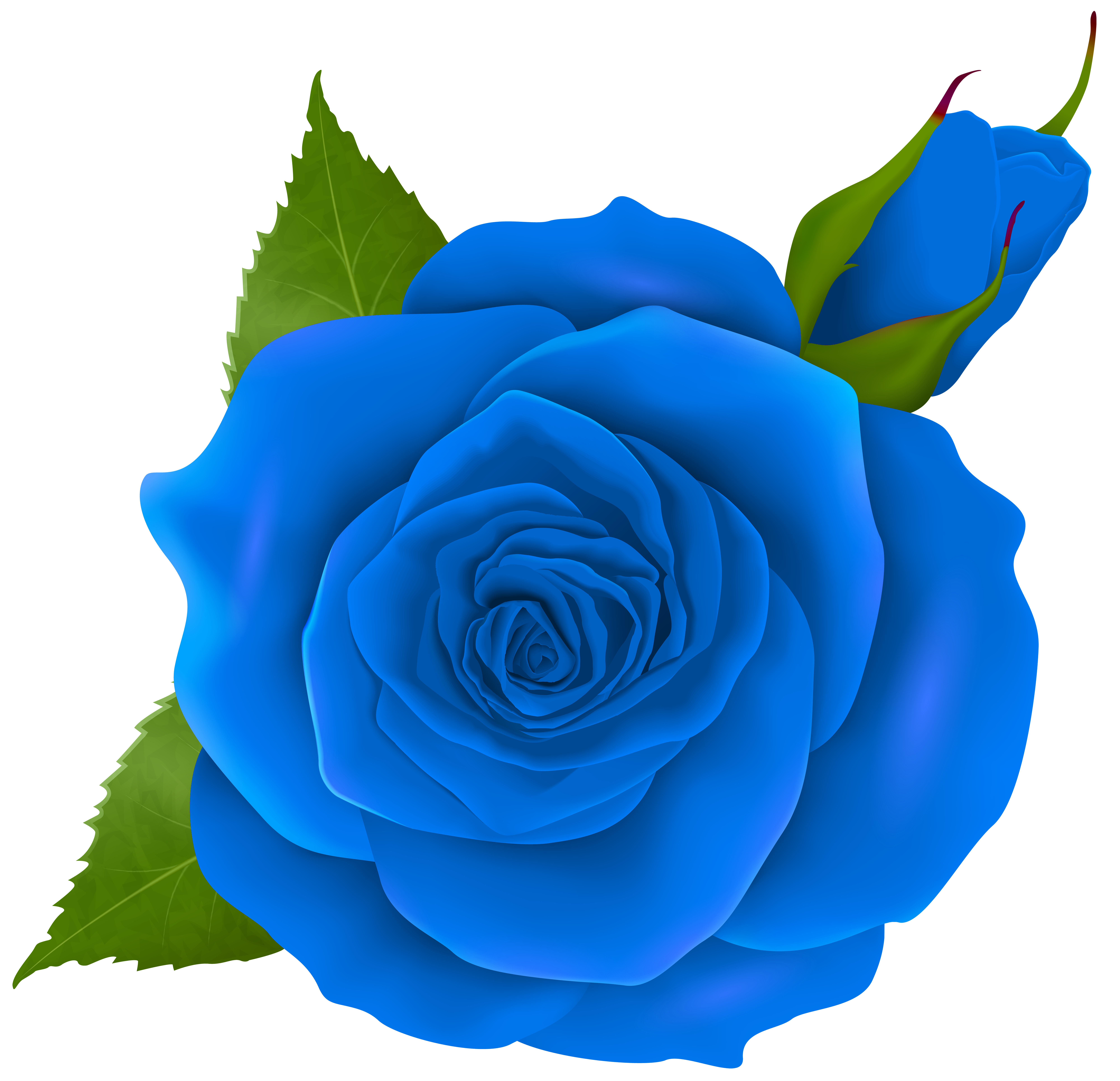 Blue rose and bud. Clipart roses doodle