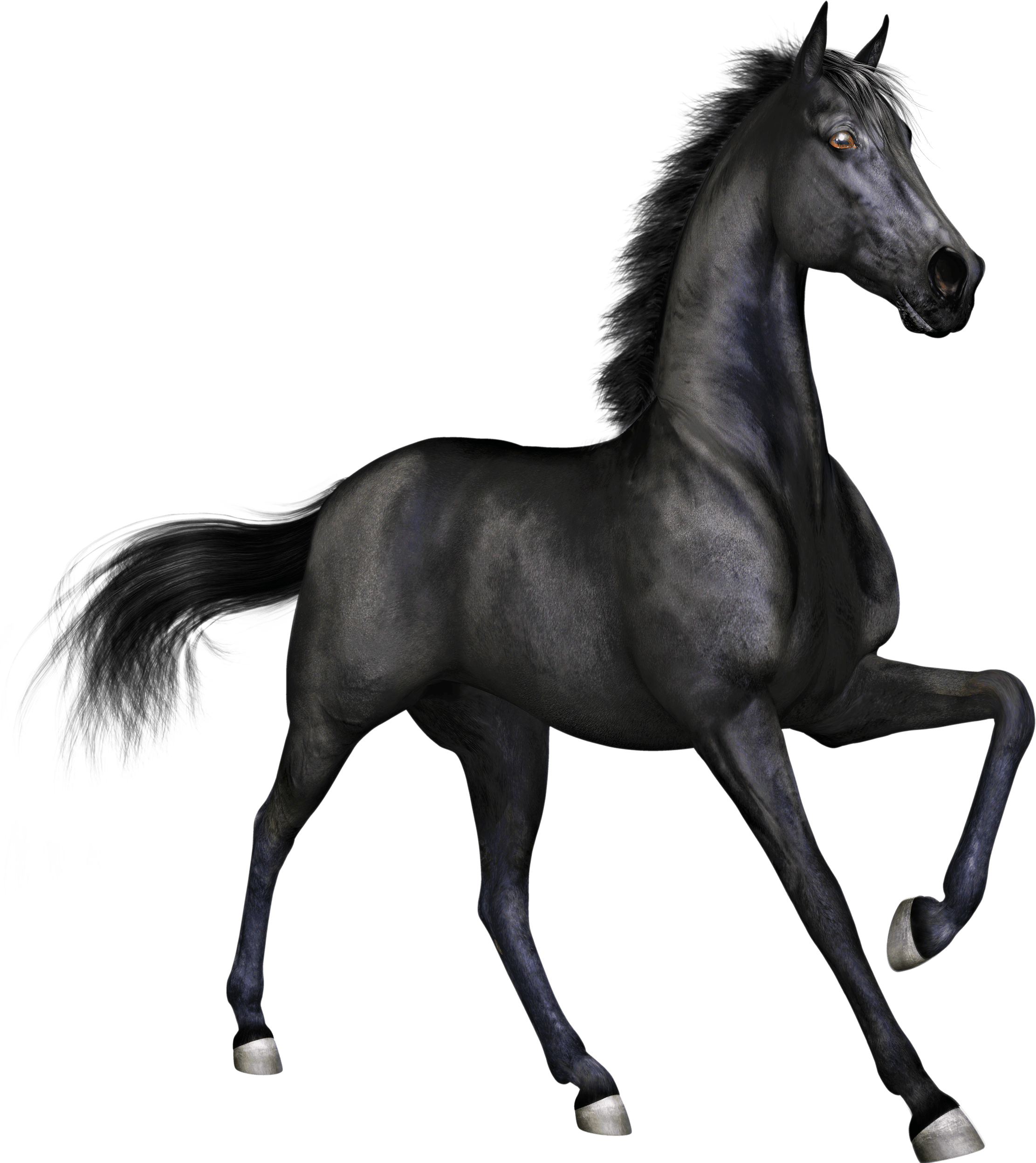 Family clipart horse. Free thoroughbred