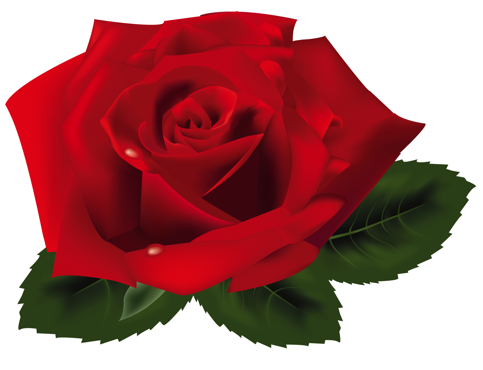 Png gallery yopriceville high. Clipart roses red rose