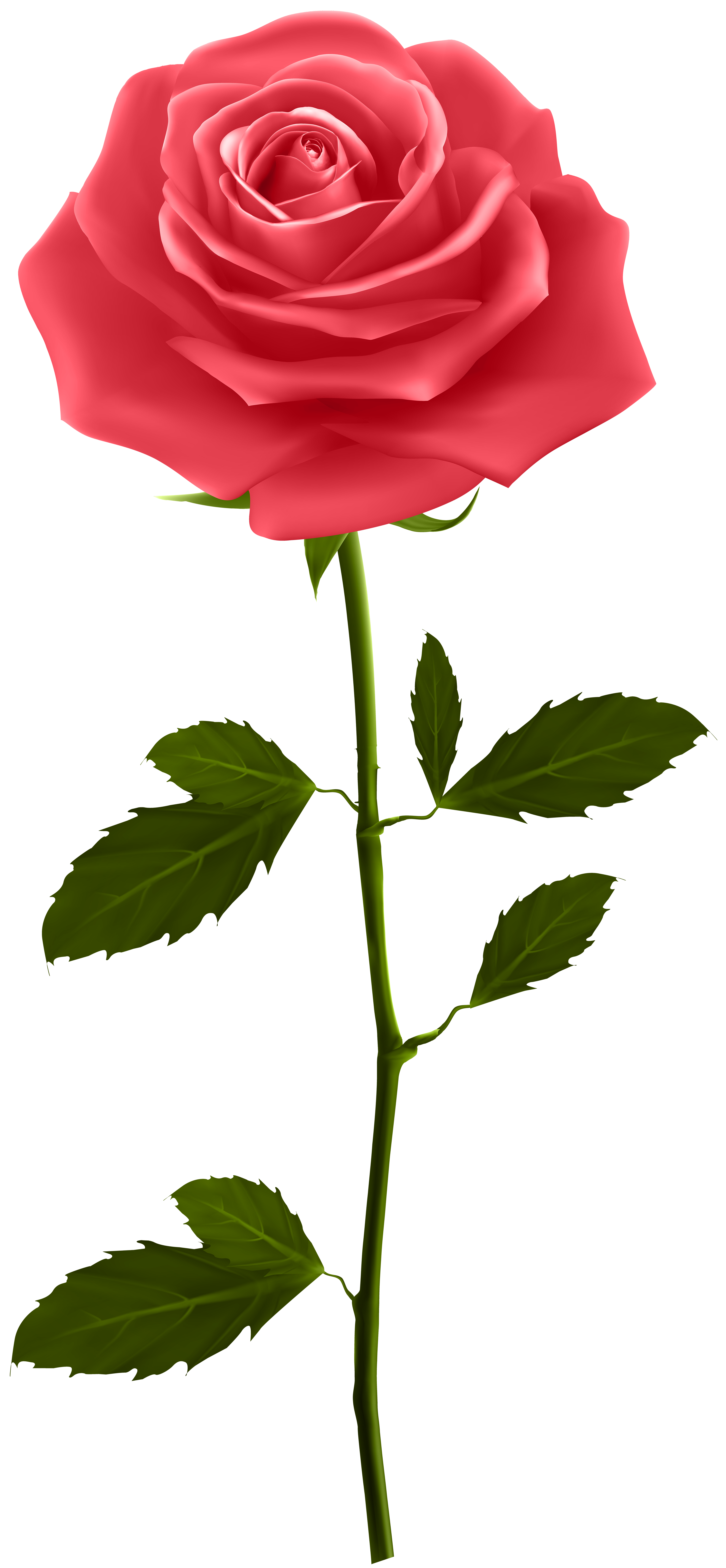 Red rose with stem. Clipart roses stick