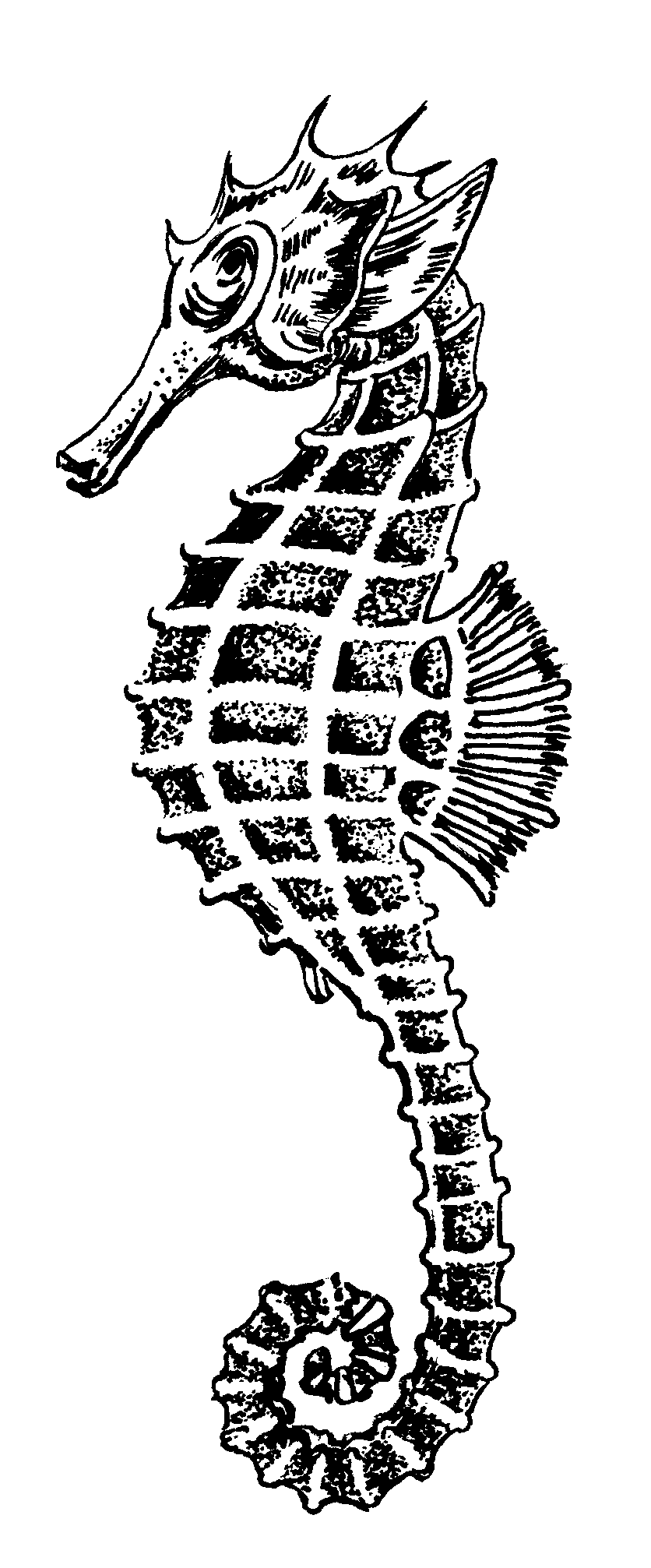 Seahorse public domain image. Shell clipart sea horse