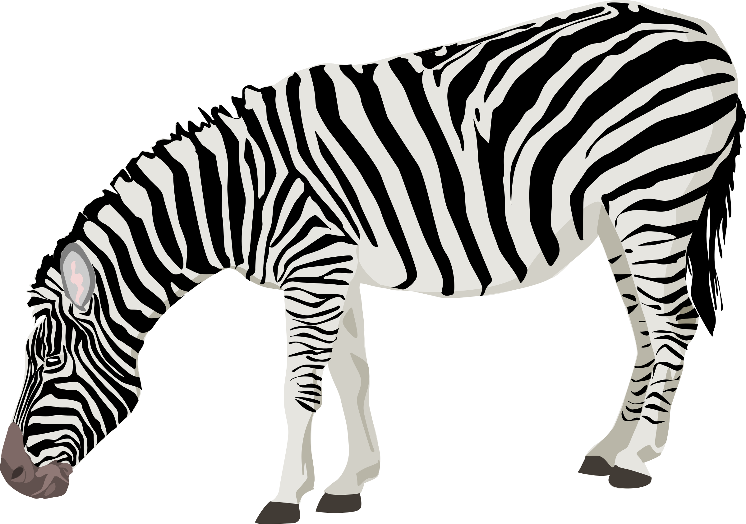 Clipart zebra zebra outline. Icons png free and