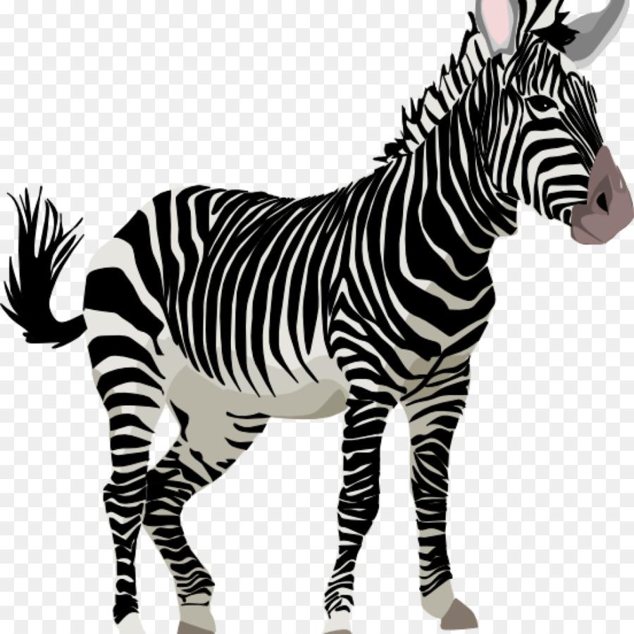 Clipart zebra family. Illustration wildlife pattern graphics