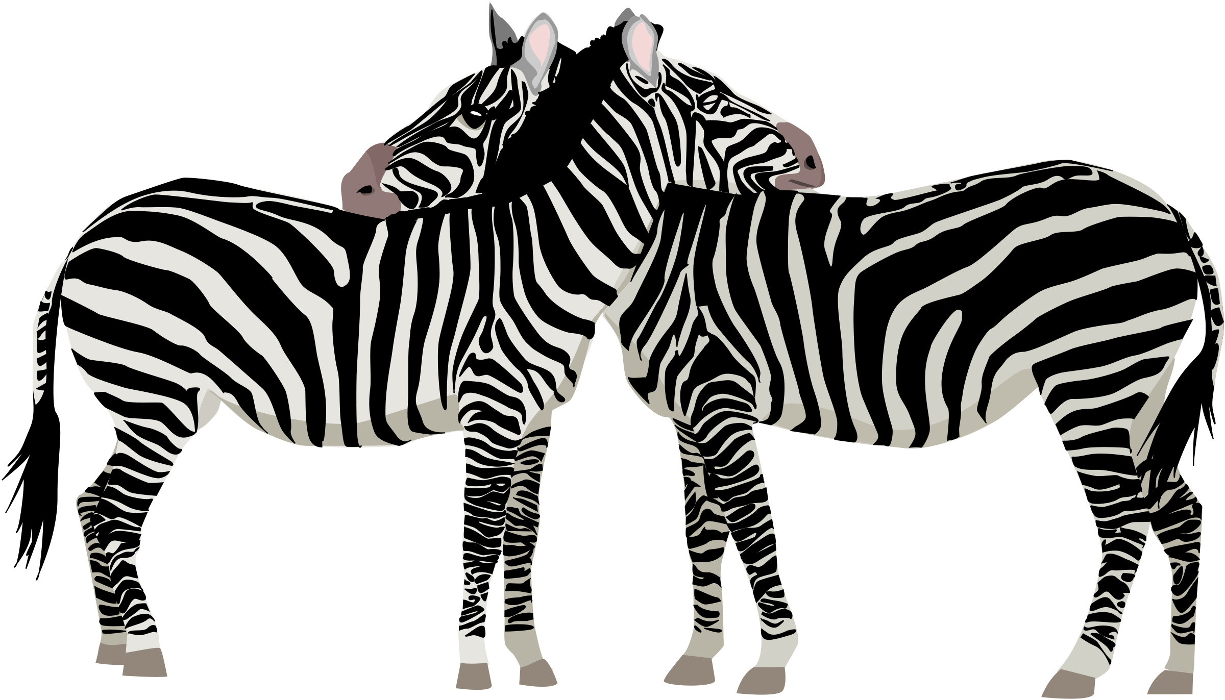 Families clipart zebra. Zebras big image png