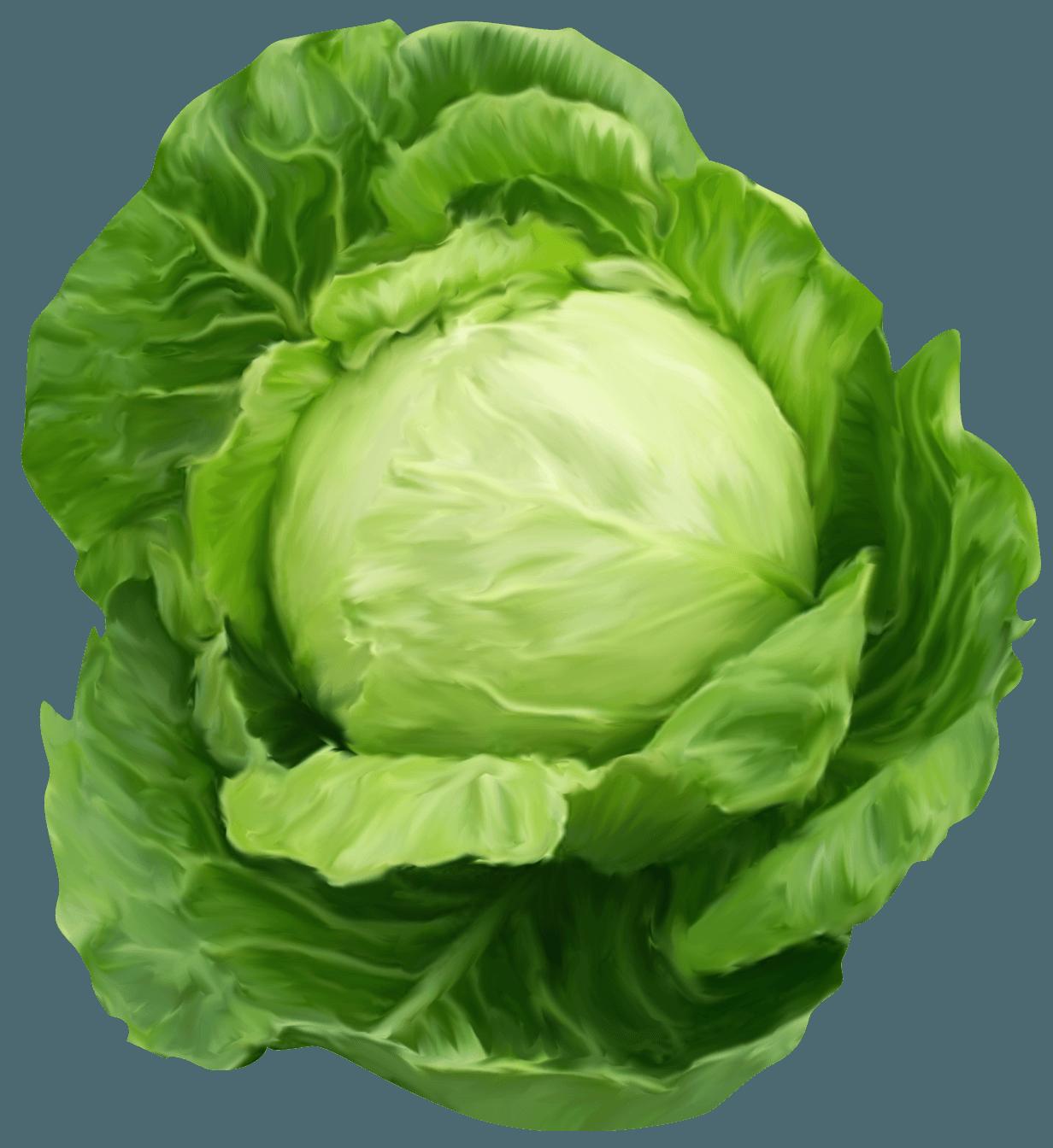 Soup clipart cabbage soup. Health benefits of pinterest