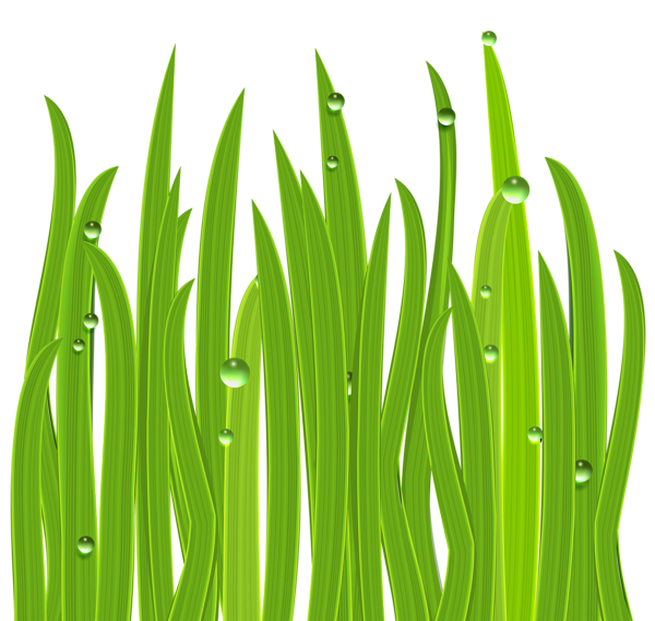 clipart grass rock