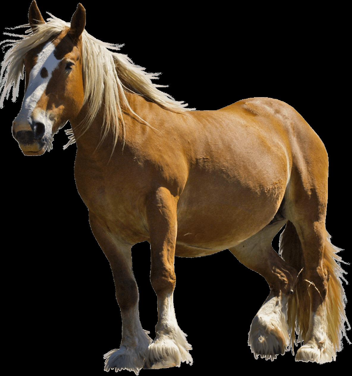 Farm horse transparent png. Horses clipart front