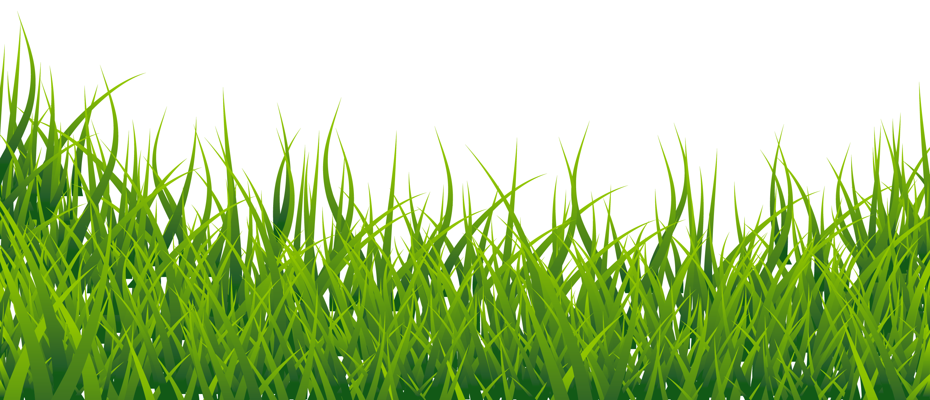 Picture of a adsleaf. Grass png images